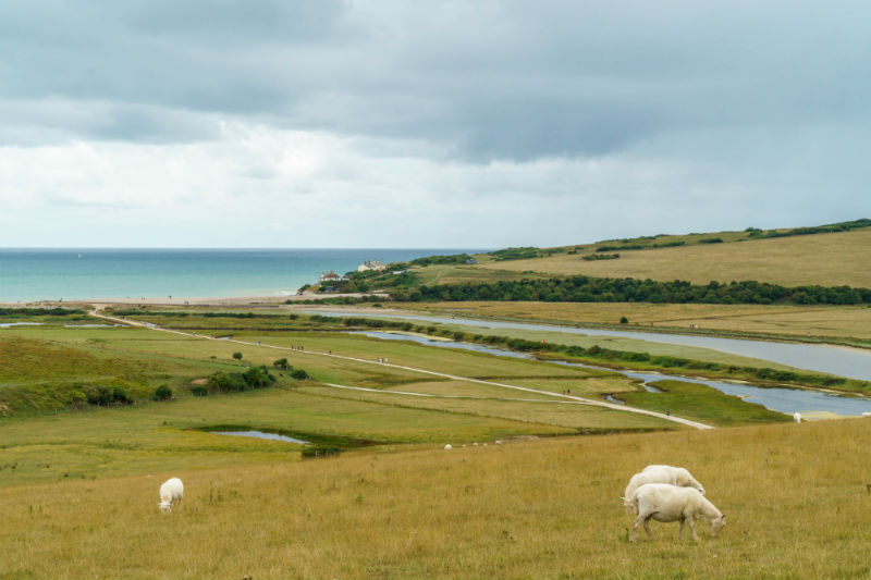 landscape of the sussex downs